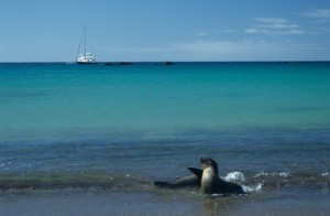 Eco-tourism helps regulate impact tourism has on the envrionment, while promoting the destination's natural beauty.Picture of Galapagos.